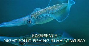 Experience night squid fishing in Ha Long Bay